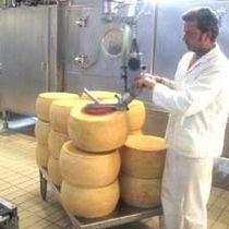 Manipulateur pneumatique / avec prise / de fromage / de positionnement