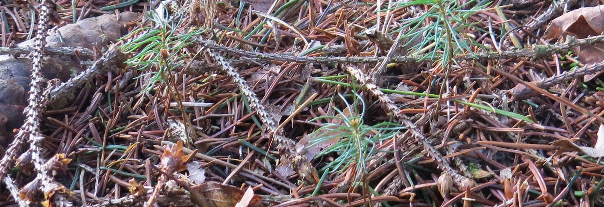 Les jeunes plantes impeccables de treeflow de la campagne publicitaire de preeflow «ont été en attendant libérées».