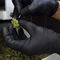 pasteurisateur de cannabis / pour plantes médicinales / à radiofréquence